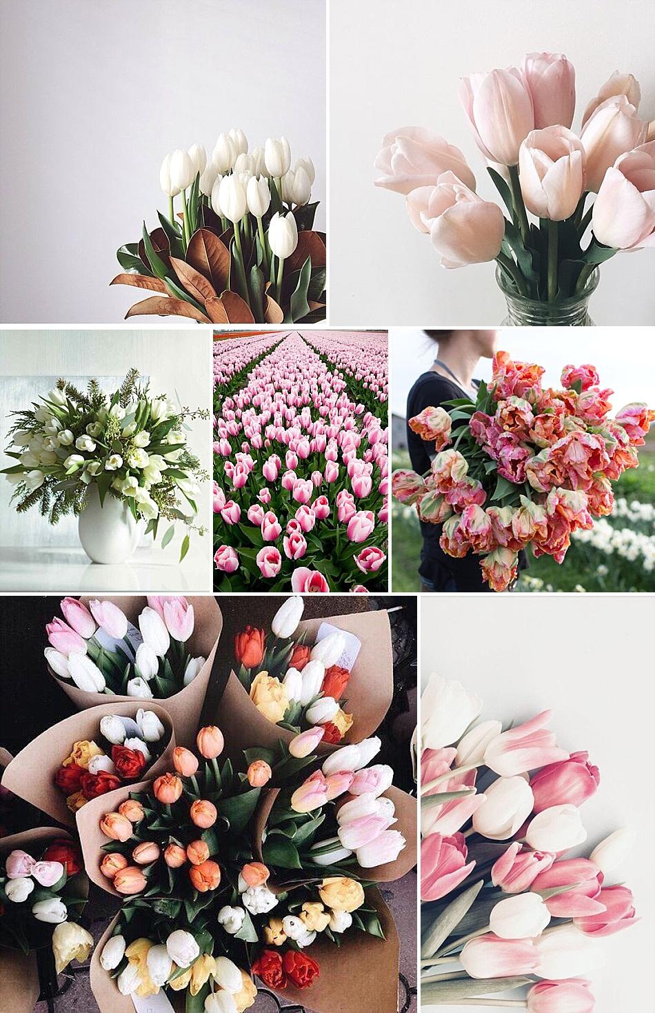 67159c8b4 Význam kvetín po prvé   Perfect Day